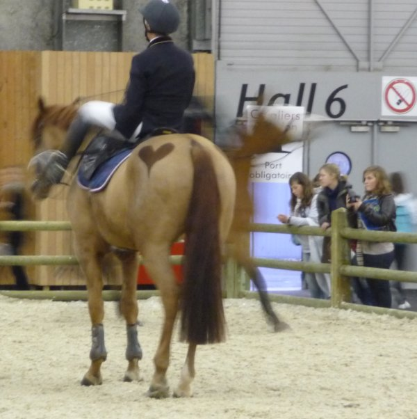 Acad mie de voltige equestre au salon du cheval 2009 - Salon du cheval a mons ...