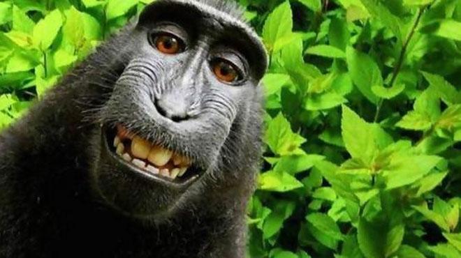 naruto macaque