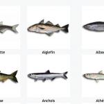 Cachez-moi cete liste de poissons cachers sur Wikipedia que je ne saurais voir